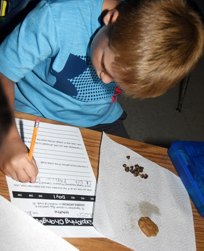 CES second-grader Jacob Sandidge writes about the physical change of removing chips from chocolate chip cookie dough.