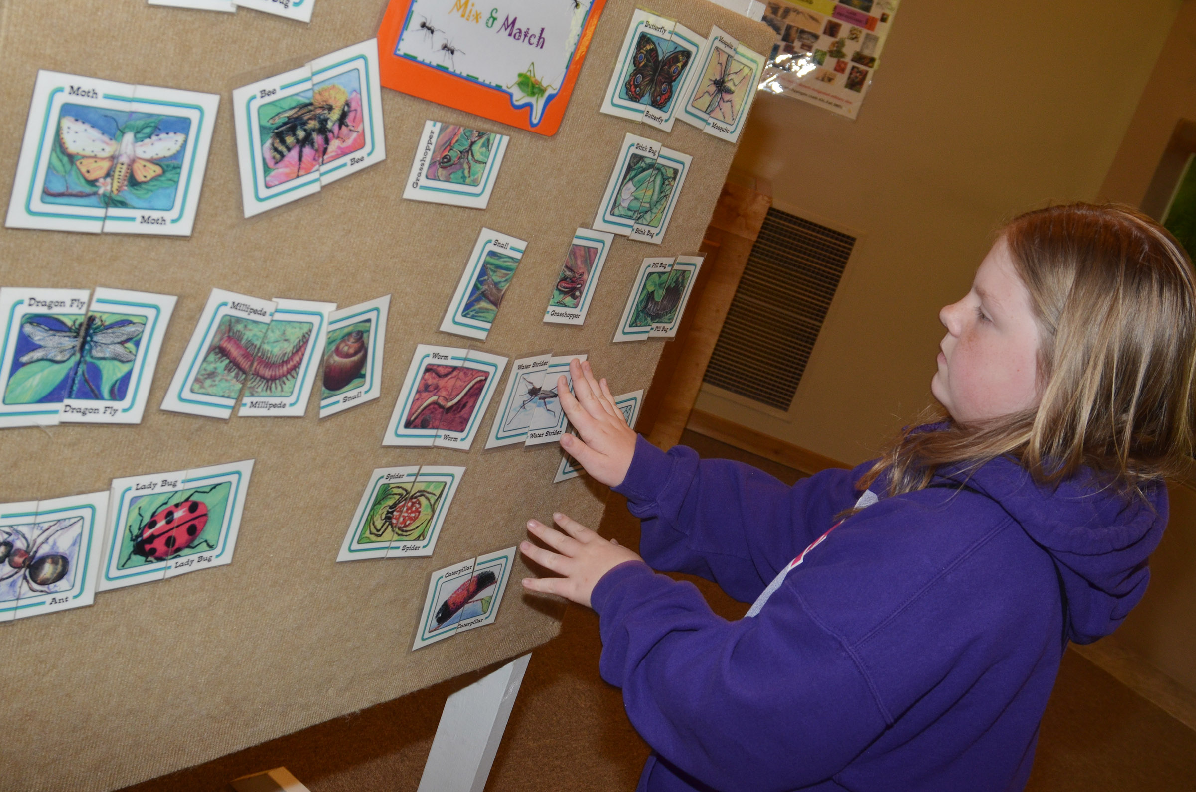 CES third-grader Alyssa Bennett plays an insect matching game at the Green River Lake Visitor Center.