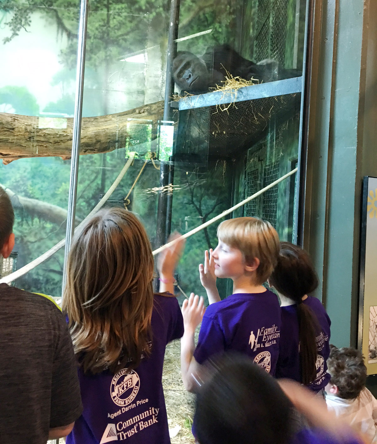 CES third-graders look at a gorilla exhibit.