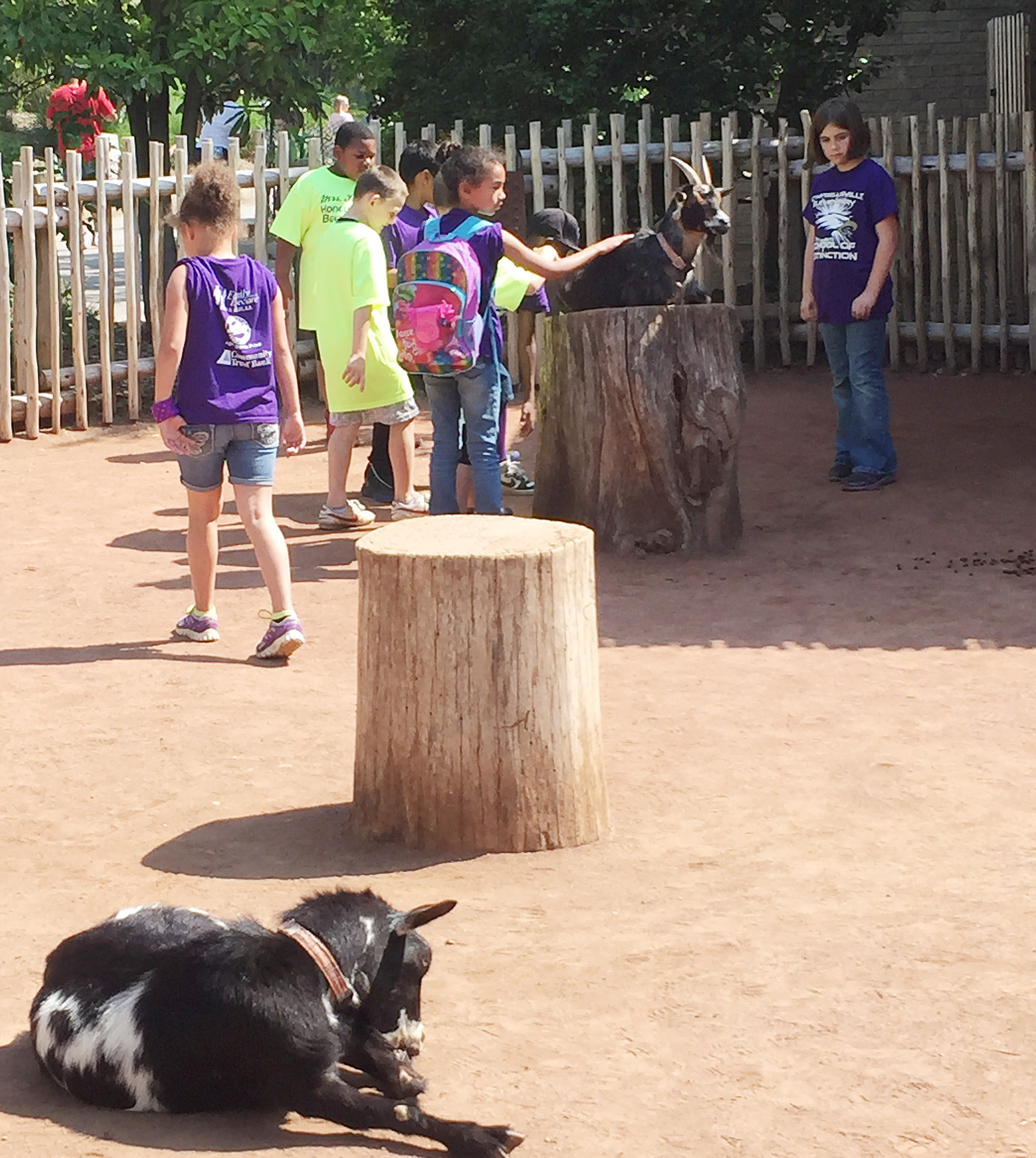 CES third-graders have fun at the petting zoo.