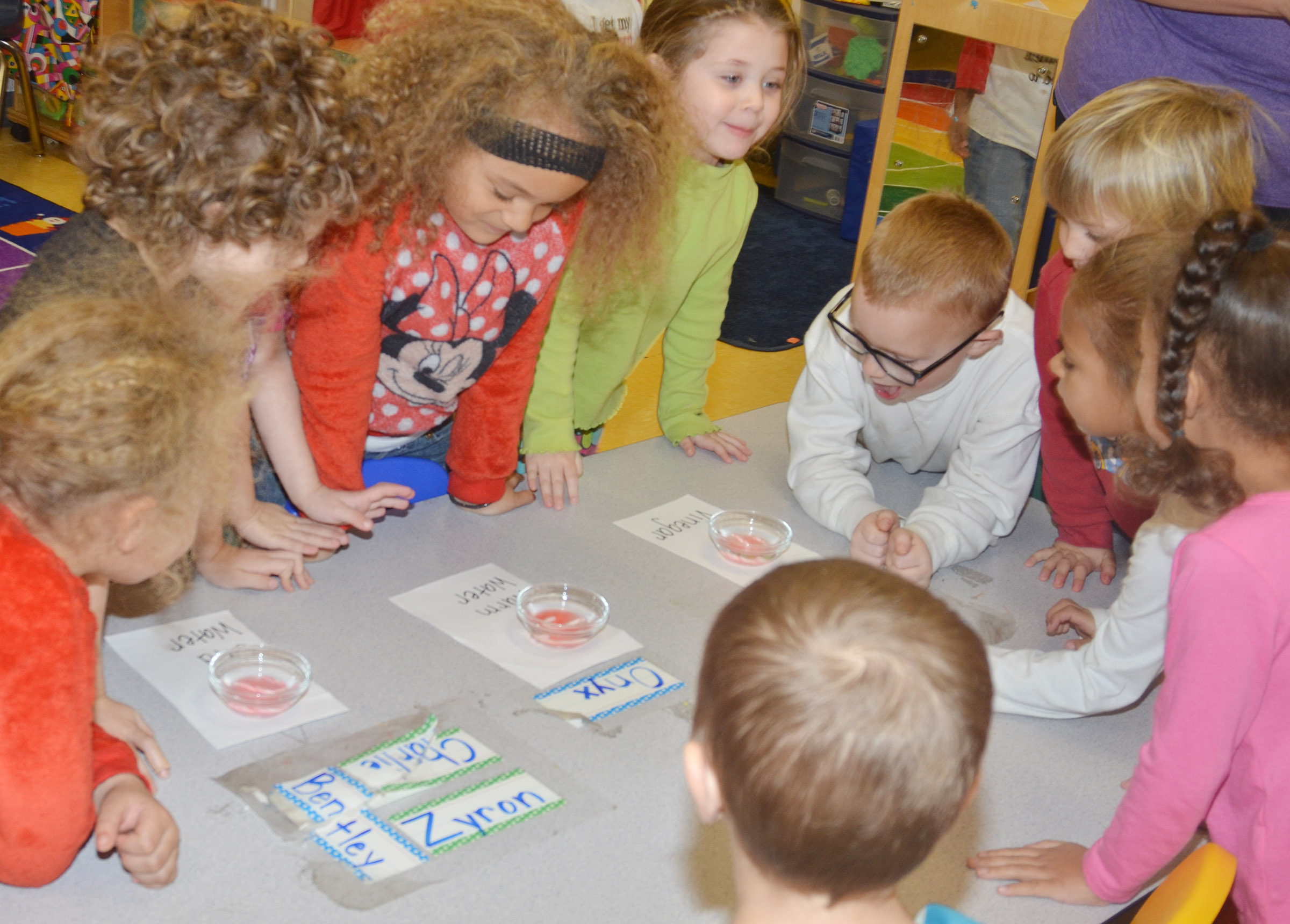 CES preschool students watch what happens when candy canes are placed in hot water, cold water and vinegar.