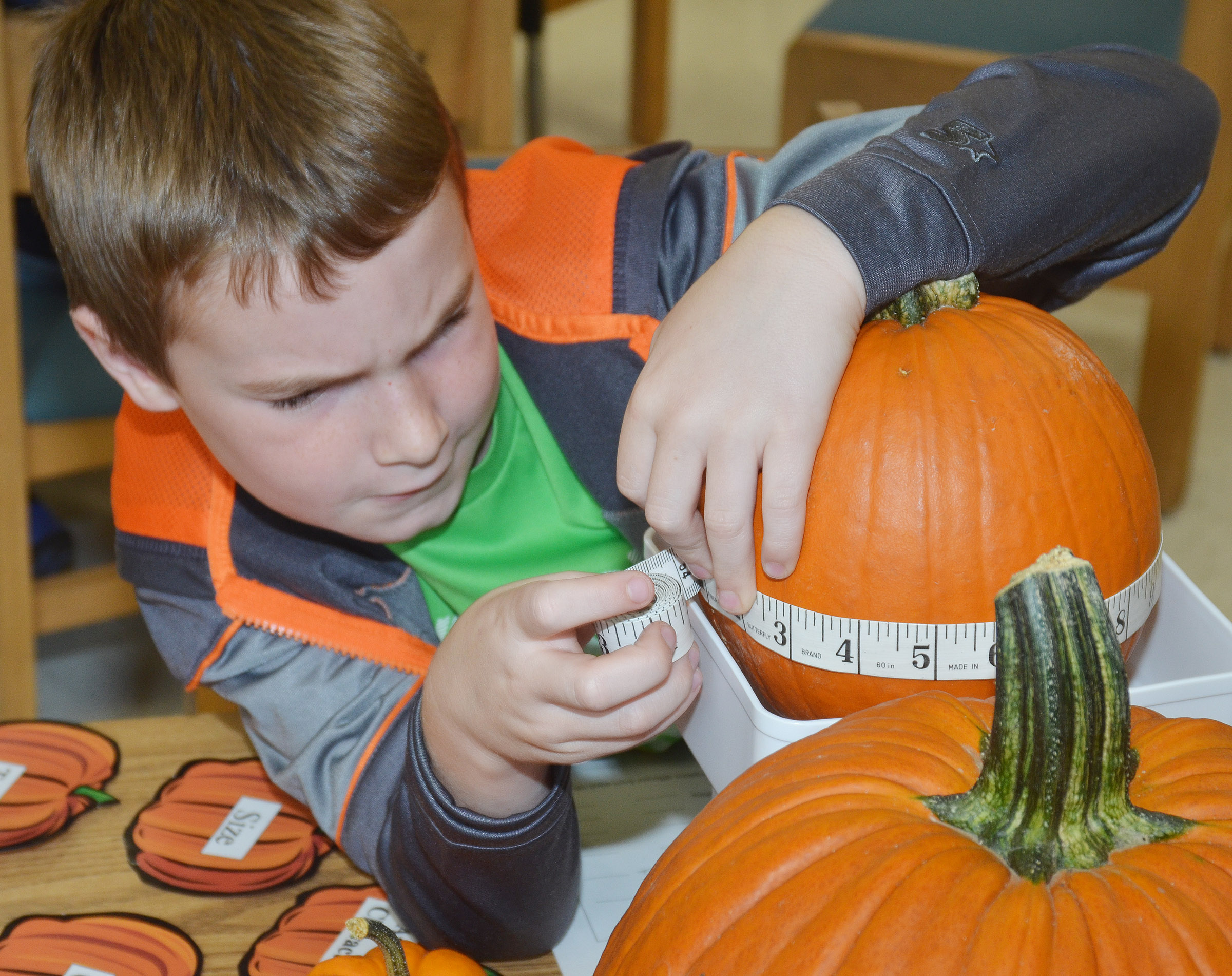 CES third-grader Stephen Green measures the circumference of his pumpkin.