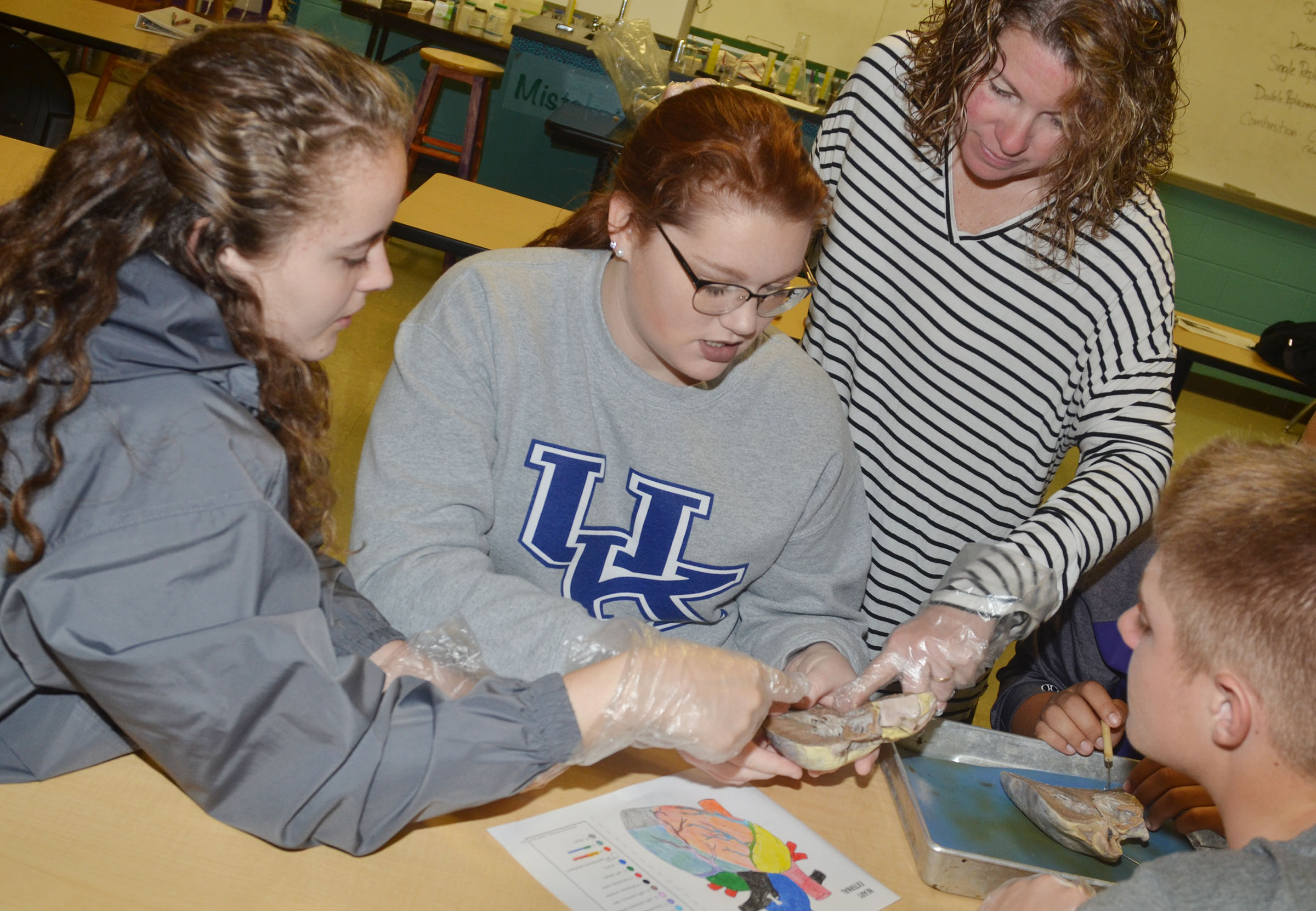CHS anatomy teacher Dee Doss helps students, from left, seniors Caroline McMahan and Mallory Haley and junior Alex Doss identify the parts of the heart.