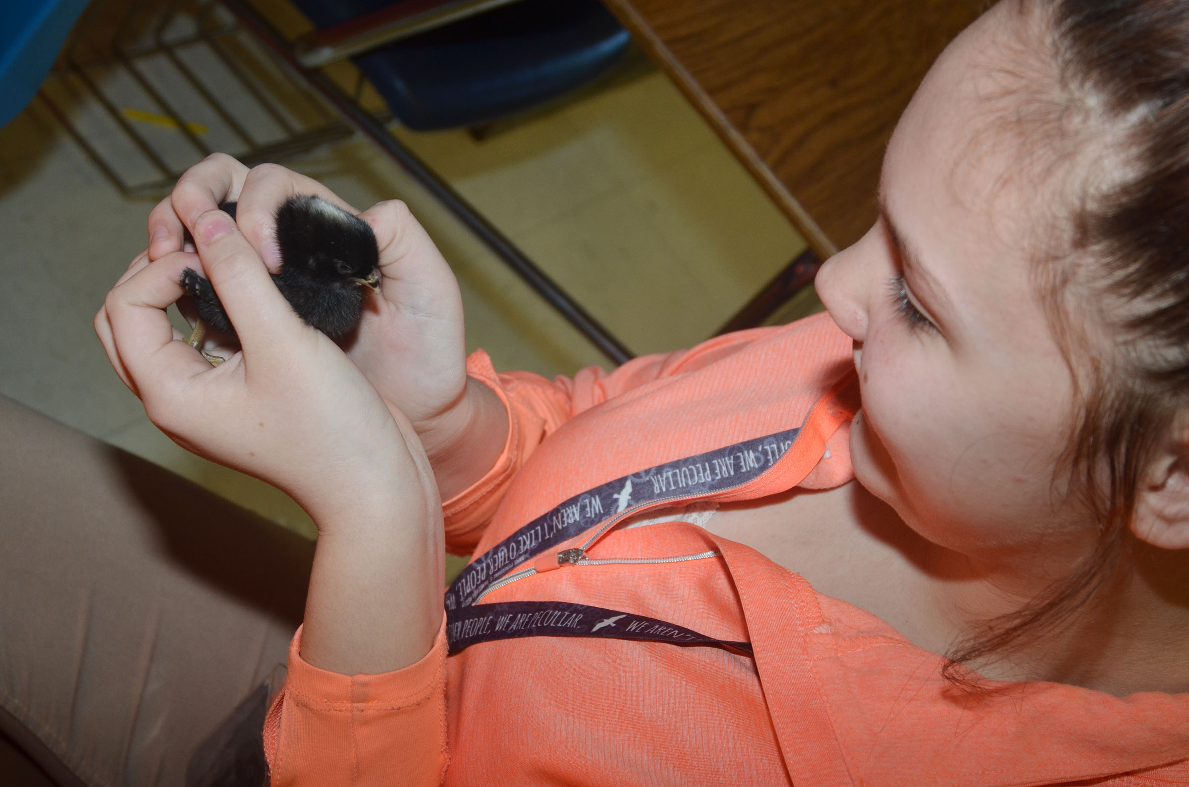 CMS eighth-grader Mystique Jones holds a baby chick.